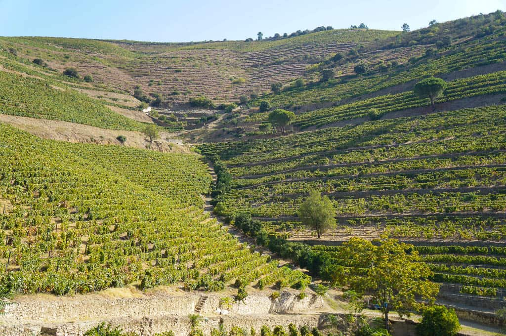 Douro Valley Wine Tasting