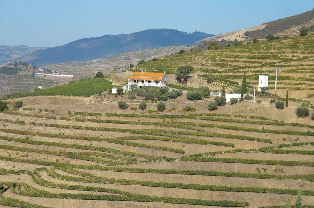 How to book a Douro River Cruise From Porto Portugal