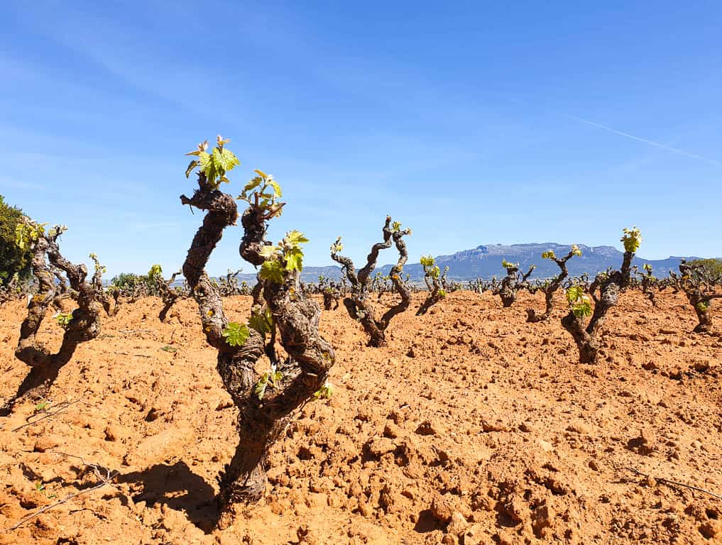 the most famous spanish wine region