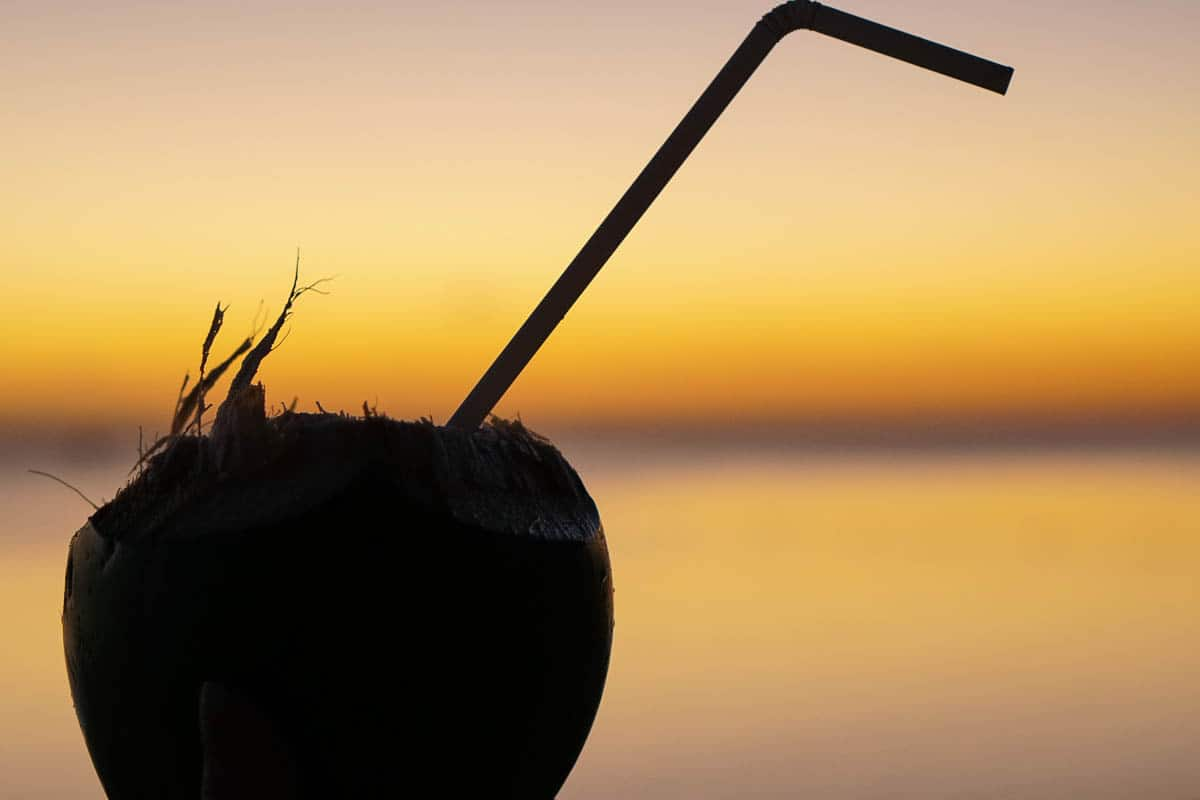 coconuts during sunset in Mauritius