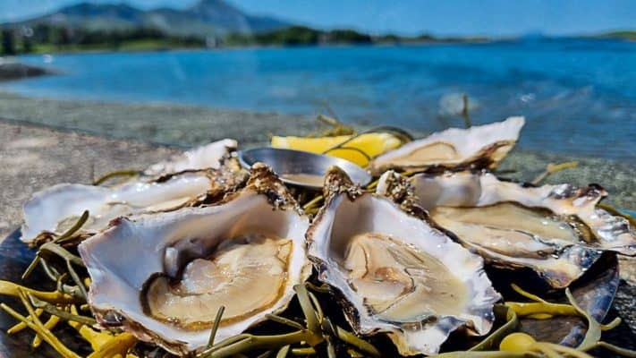 Irish Seafood Guide - How to eat the best seafood in Ireland